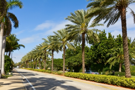 palm lined: Palm lined street in Florida