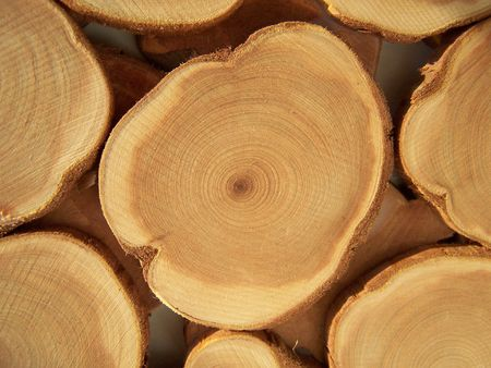 Annual circles of wood. Close up. Background