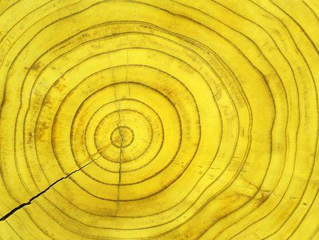 Dwarsdoorsnede van sequoia Stockfoto