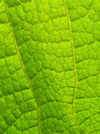 Close up of the emerald colored leaf photo