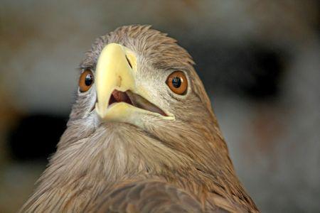 Hoofd van de eagle dichten.