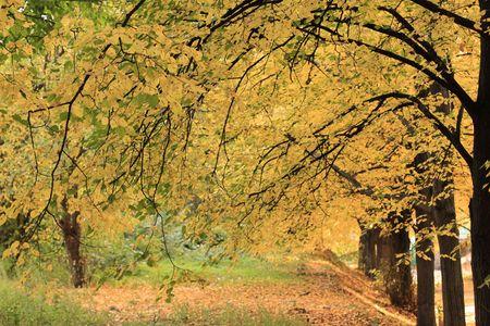 Herfst in het park. Notenboom steegje. Stockfoto