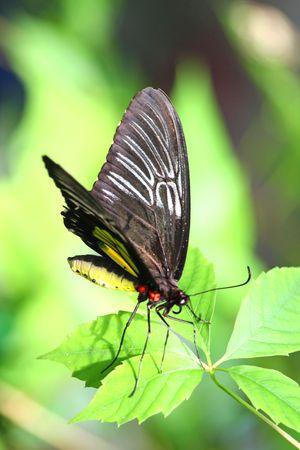 Close-up van de prachtige tropische vlinder