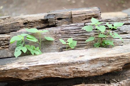sleeper: old wooden sleeper Stock Photo
