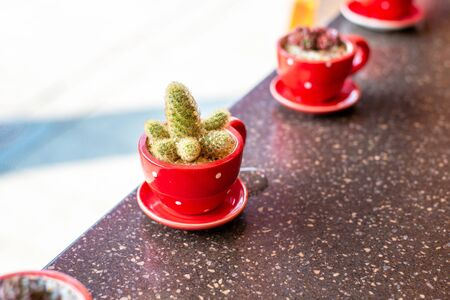 Small cactus in red cup.