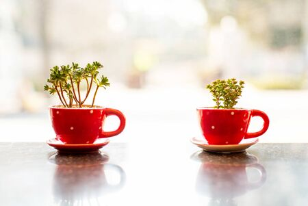 Small succulent plants in red cup. Stok Fotoğraf