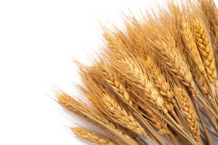 Ears of golden barley on white background.