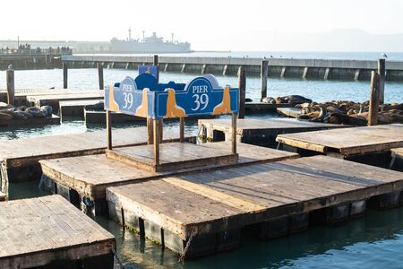 The iconic sea lions at Pier 39 in San Francisco.