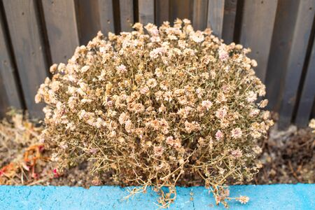 Dried tiny flower in winter season.