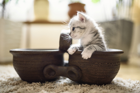 Sweet little cat with white gray fur. Adorable kitty in playful mood is sitting in a brown flowerpot.
