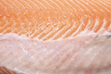 macrophotography: Salmon meat macrophotography
