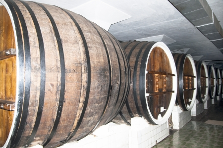 cellar with barrels for wine storage photo