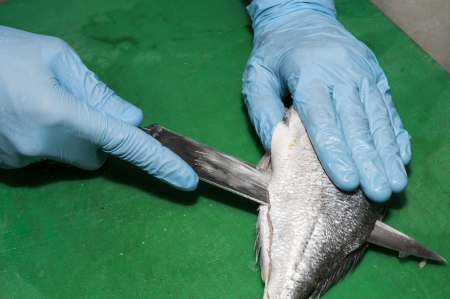 cutting of marine fish on the kitchen table photo