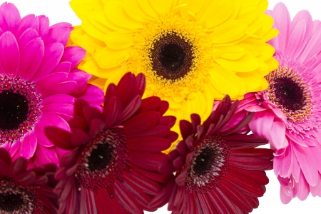 beautiful flowers in close-up shot on a white background photo
