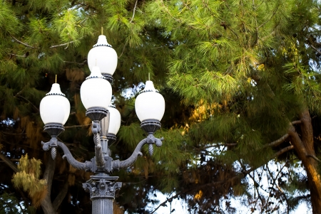 street light on the background of trees photo
