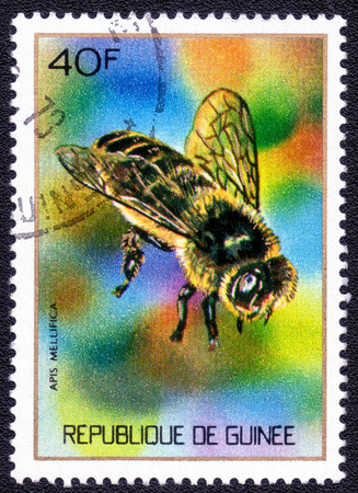 guinee: REPUBLIQUE DE GUINEE- CIRCA 1973: A stamp printed in GUINEE shows insest APIS MELLIFICA, series insects, circa 1973.