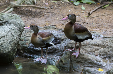 waterfowl: waterfowl in the wild near the water in the summer