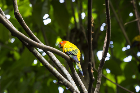 maccaw: parrot sitting on a branch in nature close-up shot