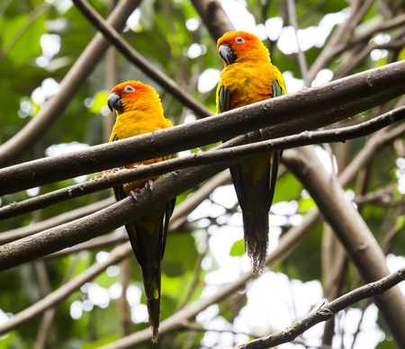 maccaw: parrot sitting on a branch in nature closeup shot Stock Photo