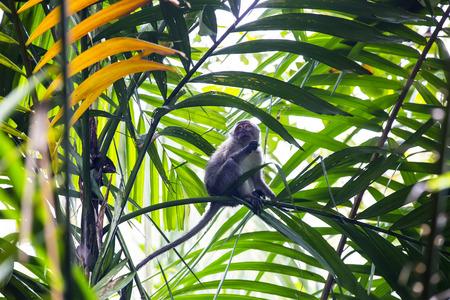 anthropomorphism: monkeys in the wild filmed close up