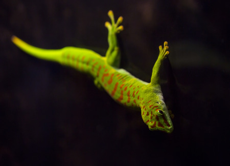 reptiles: live wild reptiles lizards shot close-up in nature