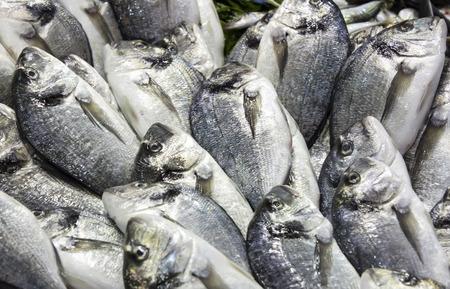 blue fish: background of fresh sea fish fishing food frame Stock Photo