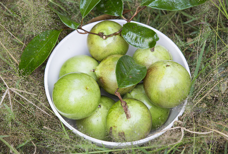 star apple ripe fruit in a bowl on the grass Stock Photo