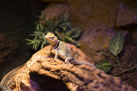 live wild reptiles lizards shot close-up in nature