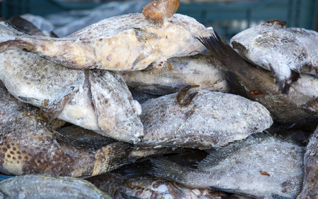 Frozen sea fish mackerel on market perch Stock Photo