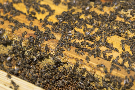 cooperate: The bee hive is shot close-up in the summer on an apiary Stock Photo