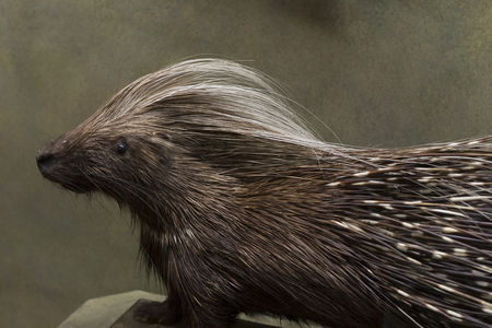 origen animal: VIENNA, AUSTRIA - 23 AUGUST 2017: Exhibits and expositions in the Museum of Natural History, Vienna.