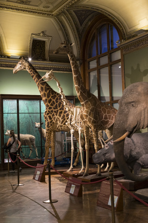 animal origin: VIENNA, AUSTRIA - 23 AUGUST 2017: Exhibits and expositions in the Museum of Natural History, Vienna.