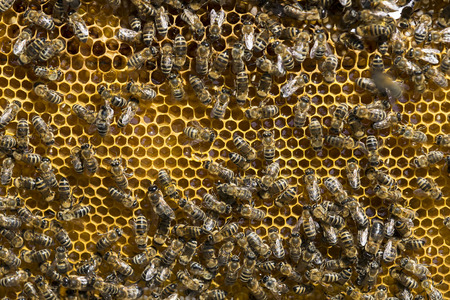 royals: The bee hive is shot close-up in the summer on an apiary Stock Photo