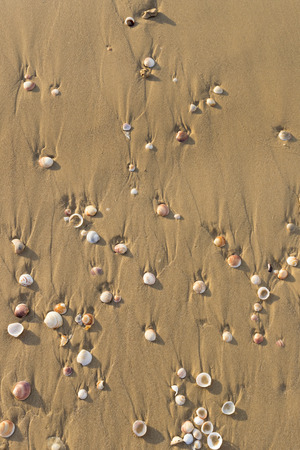 Background of a sandy beach with sea shells Imagens