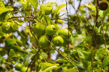 Banana tree close-up shot.