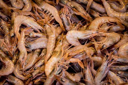 Small shrimps shot close-up.