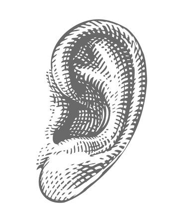 Menselijk oor in graveren stijl Stock Illustratie