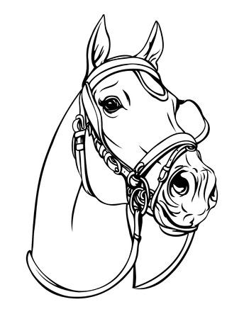 Horse head Imagens - 26585098