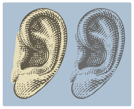 Human ear in engraving style Çizim