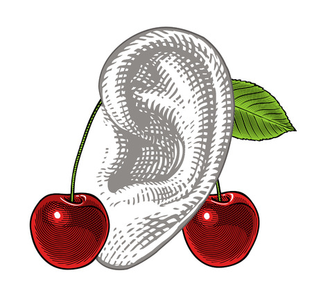 Cherries on ear in vintage engraving style   Holiday concept  Stock Illustratie