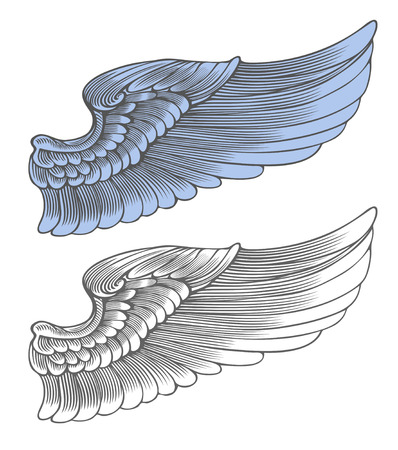 Wing in engraving style  Vector illustration, isolated, grouped, transparent background