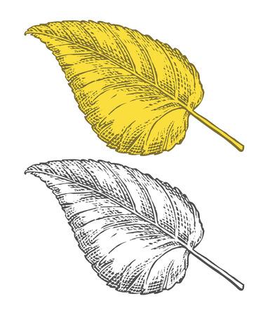 Vector illustration of autumn leaf on transparent background