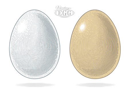 Egg in vintage engraved style. Vector illustration, isolated, grouped, transparent background Çizim