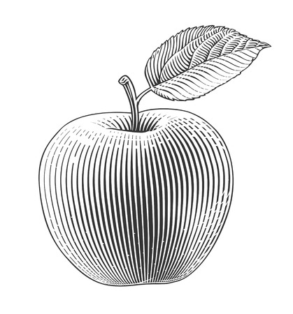 Apple on transparent background in engraving style