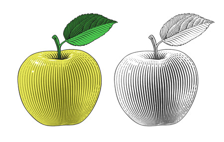 Vector illustration of an apple on transparent background in engraving style