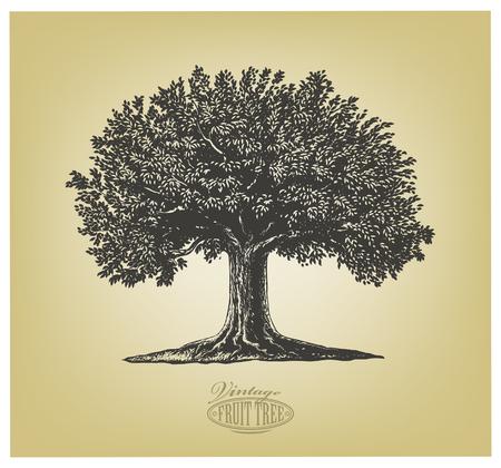 Bağbozumu oyma tarzında bir meyve ağacının Vector illustration. İzole Grubu.
