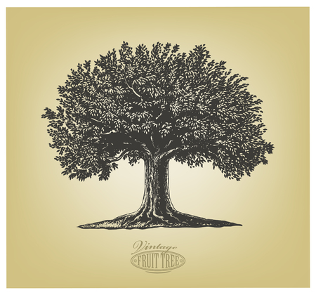 stylized: Vector illustration of a fruit tree in vintage engraving style. Isolated Group.