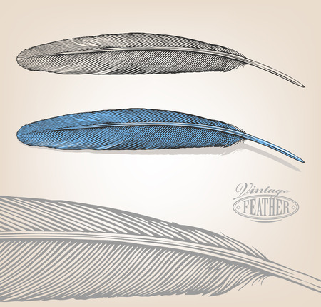 Vector illustration of feather in vintage engraving style on isolated backround.