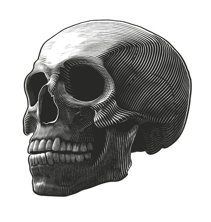 Human skull in woodcut style. Vector illustration, isolated, grouped on transparent background