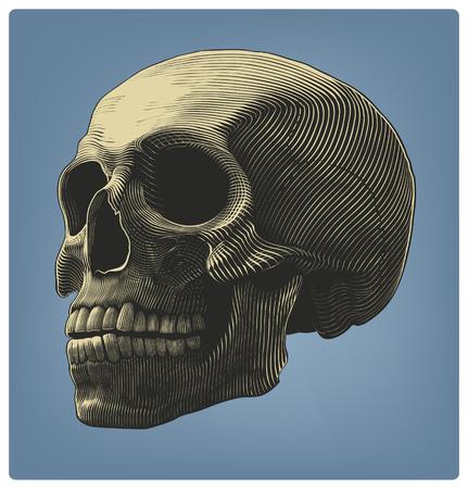 Vector illustration of human skull in woodcut style